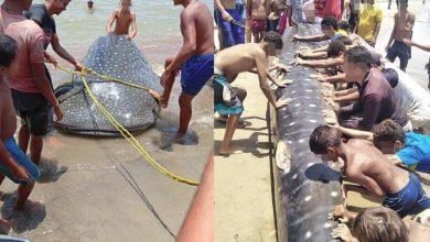 """Photo of Cómo """"masacre"""" califican la pesca y descuartizamiento de tiburón ballena en Barcelona"""