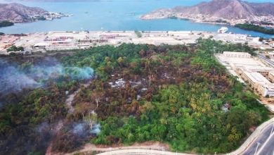 Photo of 39.298 hectáreas fueron afectadas por incendios forestales en el 2020